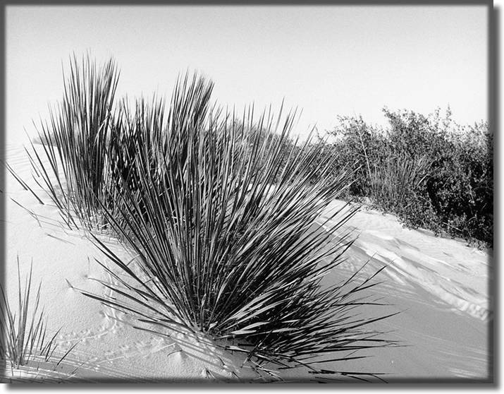 Picture of White Sands New Mexico